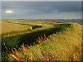 SU6803 : Farlington Marshes by Chris Gunns