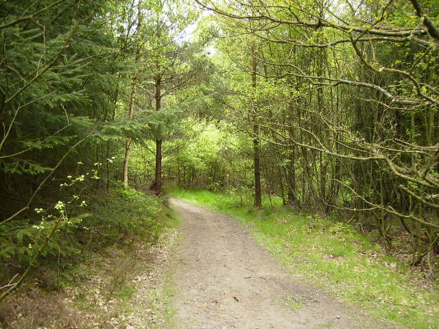 One of many tracks in Wykeham Forest