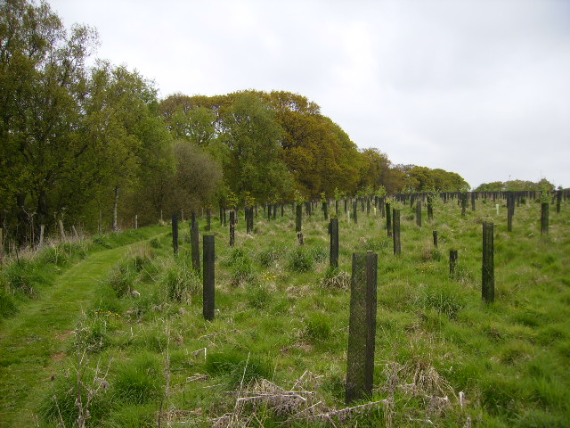 Newly planted extension to Wykeham Forest
