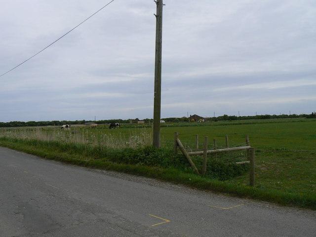 Pastoral Agriculture, Southfield Farm