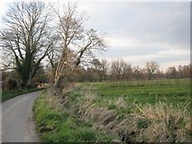 TM2281 : Mill Lane, Needham by Margaret Brook