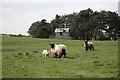 NU1931 : Sheep Pasture, Elford by Mick Garratt