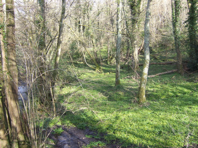 Wooded valley at Furley