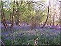 SP1762 : Austy Wood near Henley-in- Arden Warwickshire by Derek Charlton