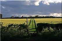 SU0017 : Public footpath across barley field, Sixpenny Handley. by Simon Barnes