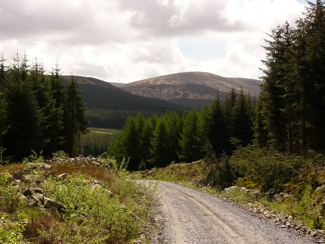 Forest road, Galloway Forest Park
