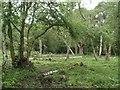 TQ1760 : Site of Roman villa, Ashtead Common by Thomas Grant