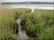 NS4273 : Marshlands by the Clyde by Stephen Sweeney