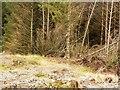 NX2357 : Platform for shooting deer. by David Baird