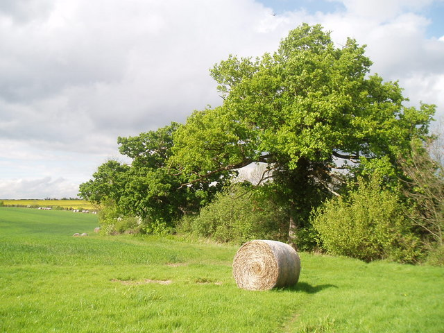 Hedgerow between crop fields