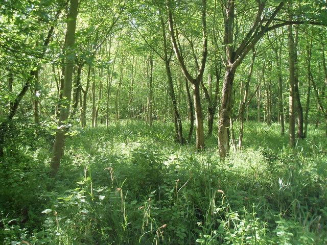 Clapham park woodland