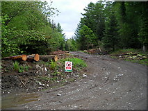NX4464 : Track in Kirroughtree Forest by Iain Thompson