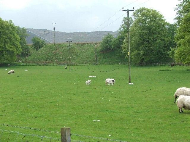 Sheep grazing at Garleffan Farm