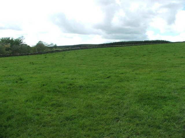 Black Hill Wood.