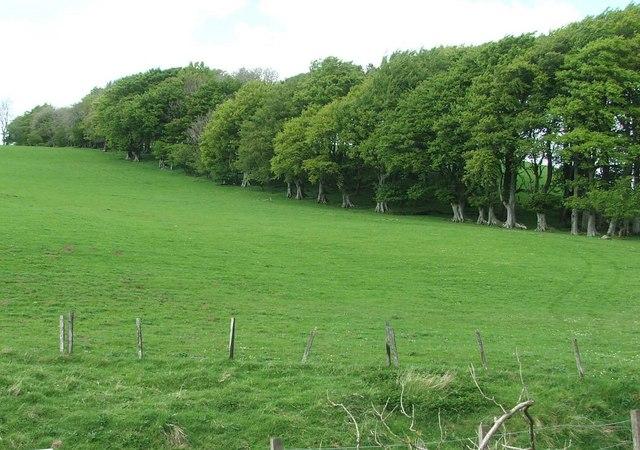Whitehill woods.