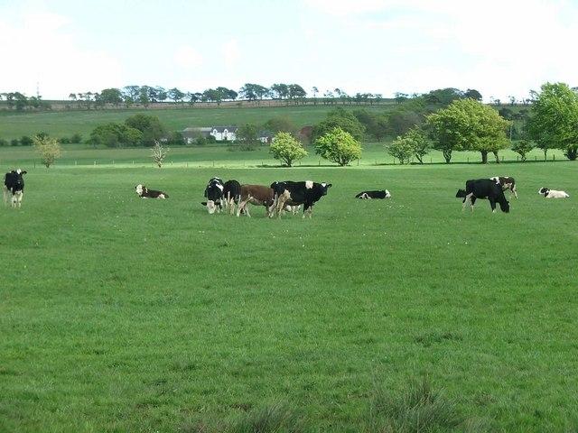 A Pastoral Scene.