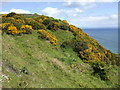D3313 : Gorse-covered hilltop by Jonathan Billinger