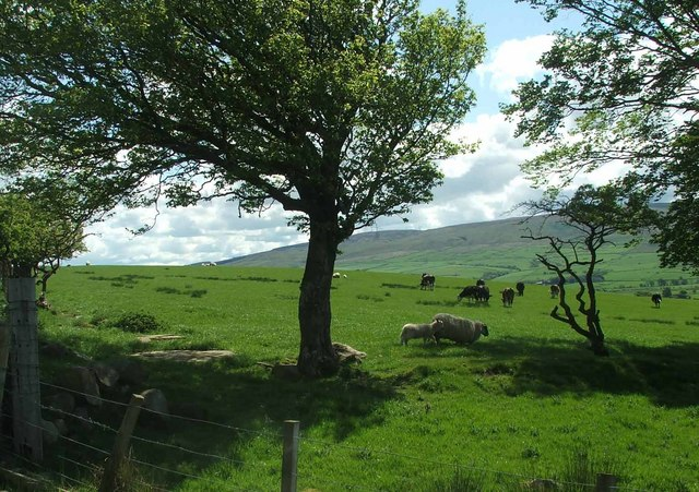 Rich Pastures.