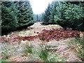 NN9246 : Forest Ride, Griffin by Robert Bone