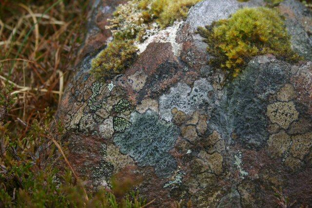 Lichen on Tanera Mòr