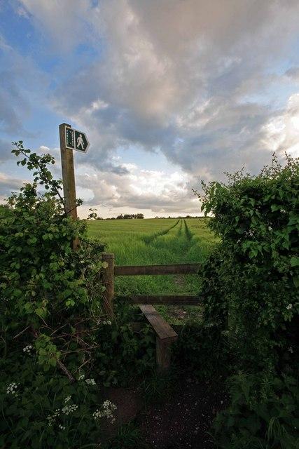 Stile into barley field, Sixpenny Handley