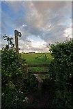 SU0017 : Stile into barley field, Sixpenny Handley by Simon Barnes