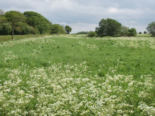 Grass field with cow parsley by the Wing Road