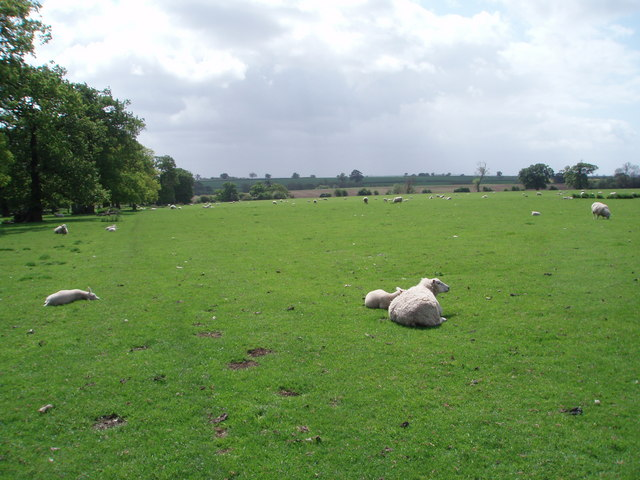 Grazing Land