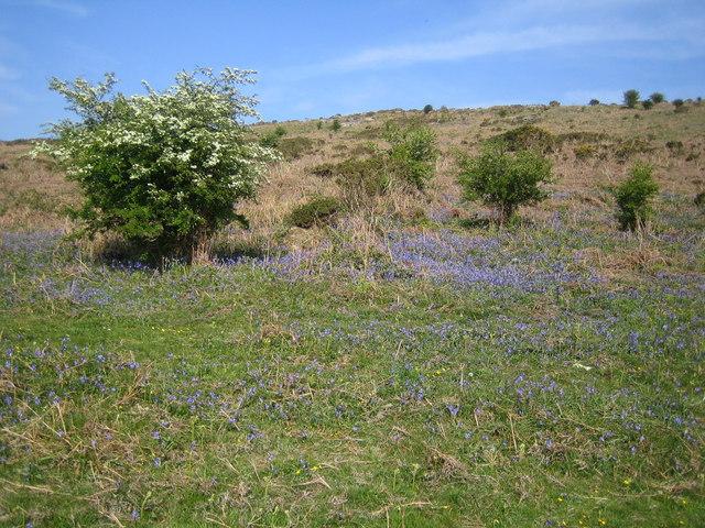 Dartmoor: Mardon Down