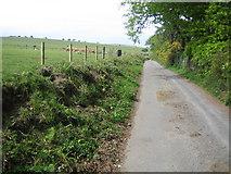 SX7379 : Dartmoor: Swine Down by Nigel Cox