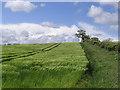 NU0716 : Barley field by Walter Baxter
