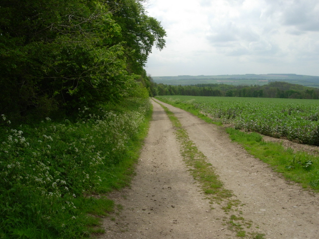 The Wolds Way running on track alongside Screed Plantation