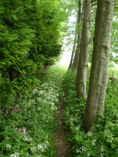 The Wolds Way on the edge of Settrington Wood