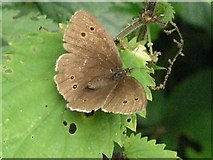 TQ4223 : Ringlet, Sheffield Park by Andy Potter