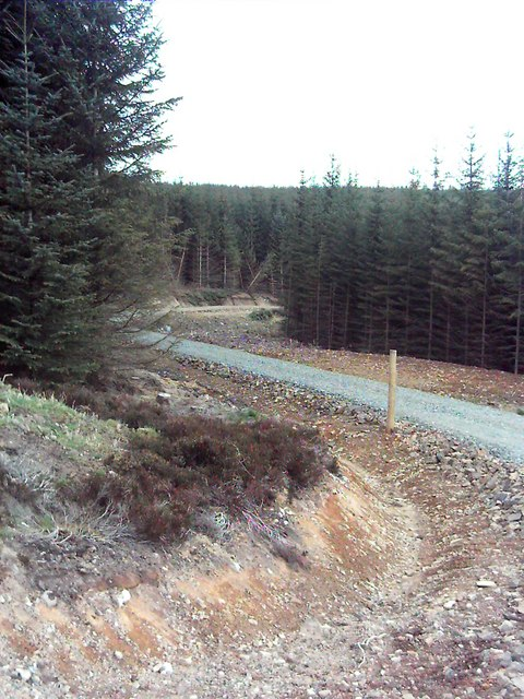 New Forestry Road