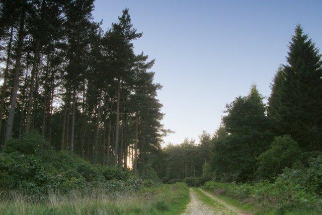 Track to Tilhill, Foxbury Plantation