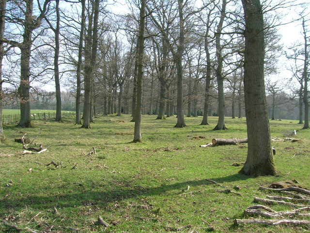 Trees in early spring sun nr Keld farm
