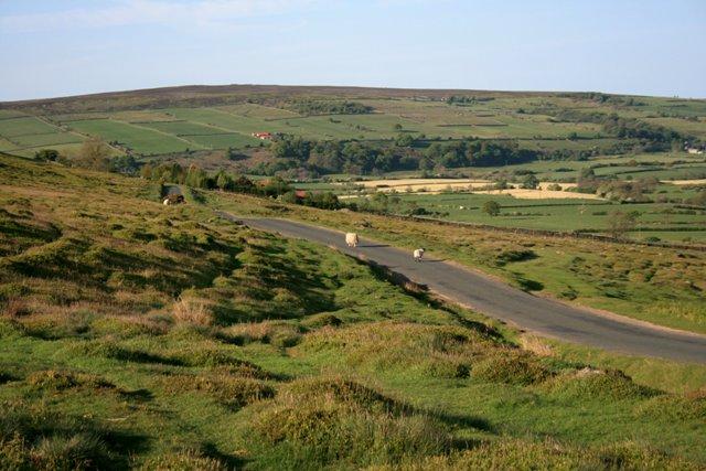 Road Along Little Fryup Dale