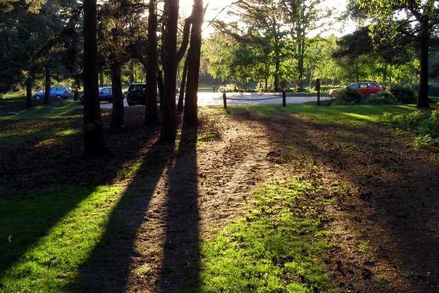 Long shadows at Half Moon Common car park, New Forest