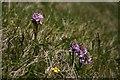 NC2056 : Orchids at Rubha na Leacaig by Bob Jones