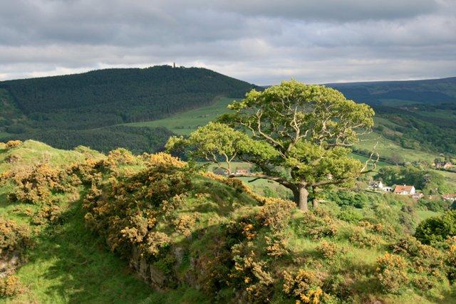 Cliff Ridge Wood