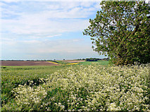 TF3380 : Wolds Country by Ian Carrington