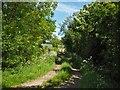 NZ4124 : Farm Lane by Stephen McCulloch