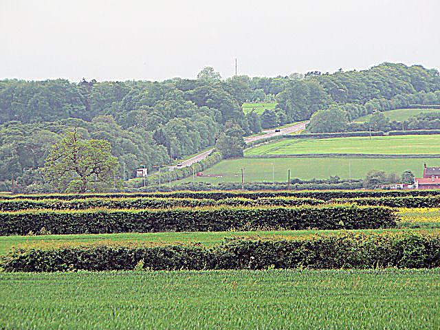 Kenwick Hill