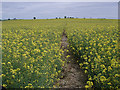 SP2295 : Oil Seed Rape on the HOEW by Andy Stephenson