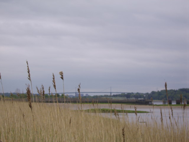 Reeds by the Clyde