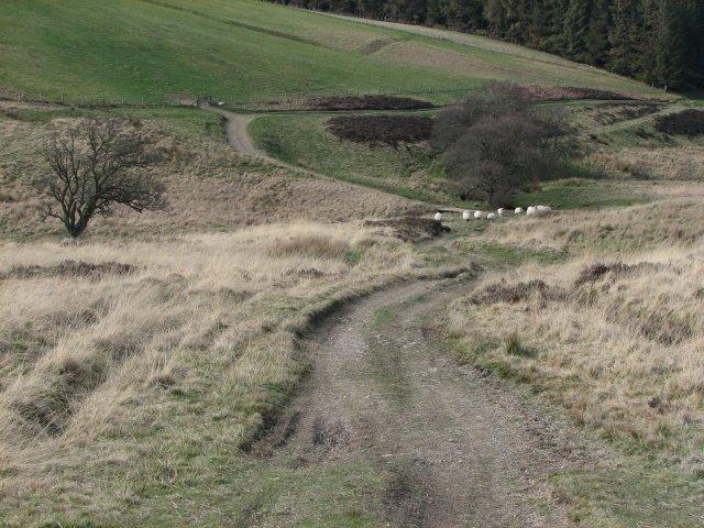 Lamington Burn valley