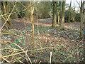 SO9565 : Woodland at Piper's Hill by Trevor Rickard
