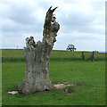 SO6898 : Dead Oak Tree, Linleygreen, Shropshire by Roger  Kidd