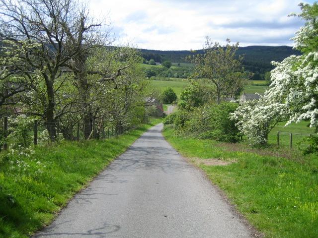 Road near The Peels, Harbottle